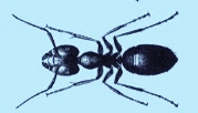 carpenter-ant-treatment-pest-control-exterminators-north-andover-ma