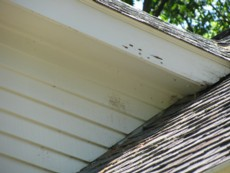 carpenter-bee-damage-canton-ma-hornet-bee-removal