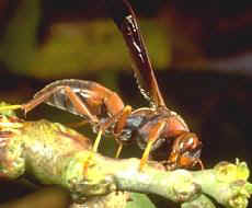 paper-wasp-control-dedham-ma-carpenter-bee-removal