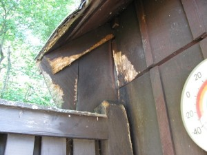 Milton-MA-Squirrel Damage to Shed