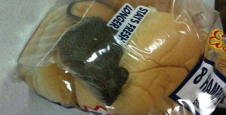house-mouse-contaminating-food-mice-control-needed-lowell-ma