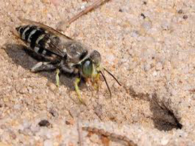 ground-bee-yellow-jacket-removal-boxborough-ma