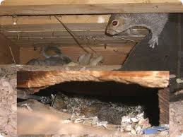 Squirrel-nest-in-attic-pepperell-ma-squirrel-removal